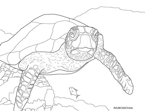 Sea Turtles Coloring Pages Sea Turtle Coloring Page Sea Turtle Sea Turtle In Finding by Sea Turtles Coloring Pages