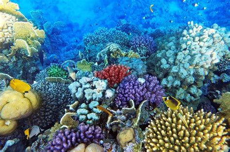Green World Sea Fish coral and fish in the sea stock photo colourbox
