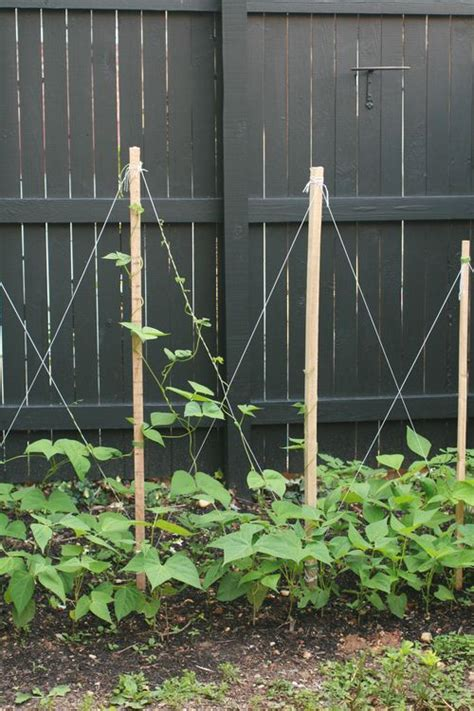 how to build a trellis how to build a garden trellis for beans woodworking