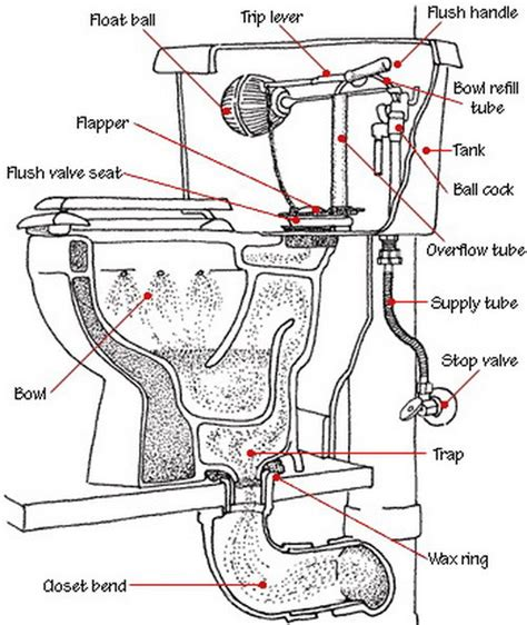 Parts Of A Water Closet by Toilet Is Not Clogged But Drains And Does Not Completely Empty When Flushed