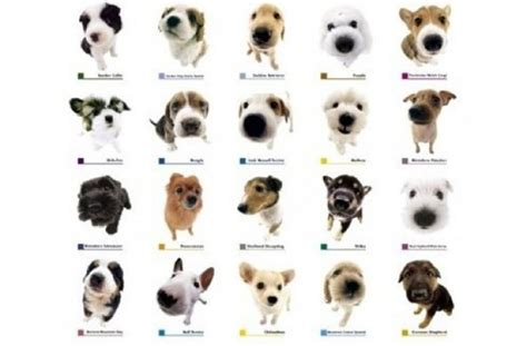all small breeds tag for small breeds list with pictures pictures breeds 011 jpg