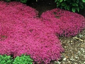 Plants That Grow In Complete Darkness by Diy Landscaping Landscape Design Amp Ideas Plants Lawn