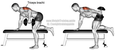 tricep kickbacks on bench dumbbell kickback exercise instructions and video weight