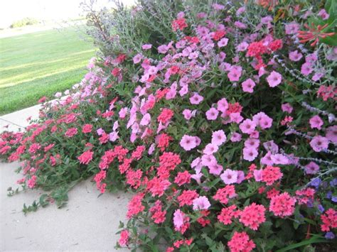 Perennial Flower Garden Plans Perennial Flower In The Garden Home Landscaping