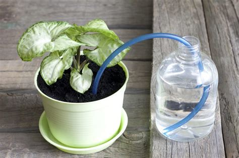 how do self watering planters work how does a self watering planter work hunker