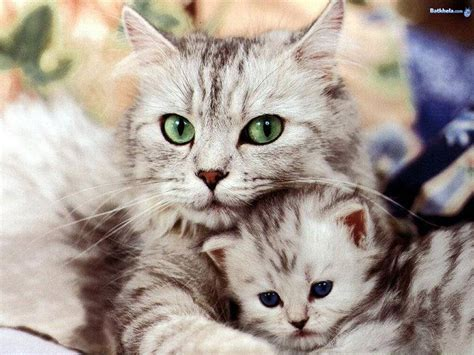 I Love Cats!!!