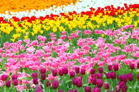 pics of spring fall bulbs spring flowers country store farm pet