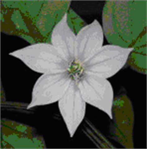 Pinset Tanaman mengawinkan bunga persilangan tanaman sejenis