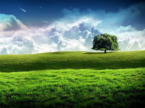 New Bliss Tree Green Landscape Scenery Wallpaper   Free