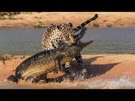 imagenes impresionantes del mundo 2012 161 espectaculares estas son las 10 mejores fotos del mundo
