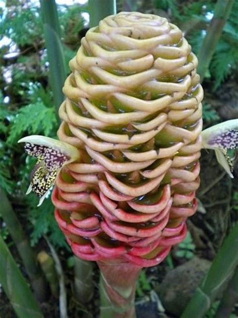 25 best ideas about weird plants on pinterest cool plants unusual flowers and trees
