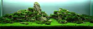 Aquascaping For Beginners by A Beginner S Guide To Aquascaping Aquaec Tropical Fish