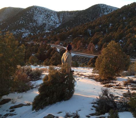 the author dragging his family s pinyon pine christmas tree