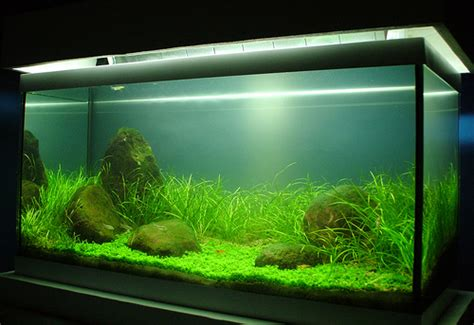 Aquascaping Techniques Iwagumi Tank Flickr Photo Sharing