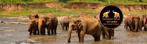best tours in sri lanka sri lanka elephant tours vacation packages