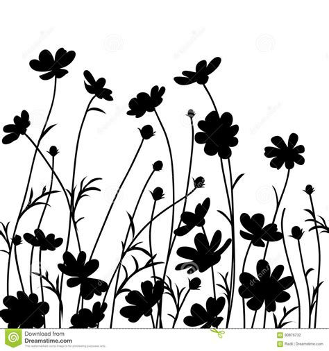 Garden Silhouette by Summer Garden Cosmos Flower Silhouette Isolated On White