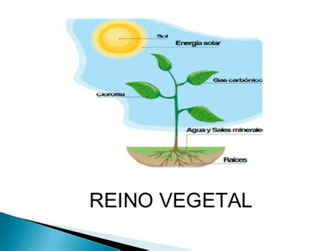 imagenes sensoriales con sus ejemplos presentacion reino vegetal