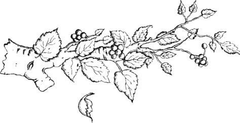 coloring page tree branch tree branches coloring page