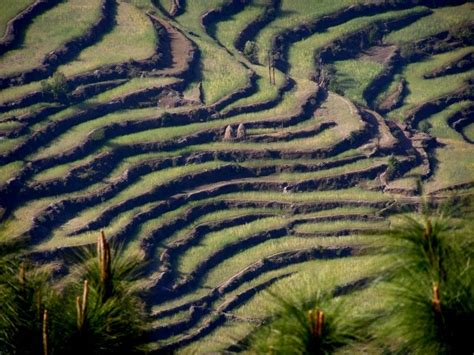 terrace farming in hindi terrace farming ranikhet a photo from uttarakhand north
