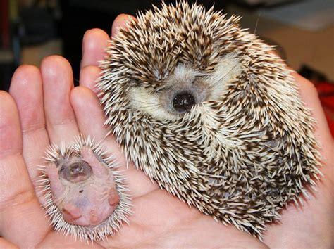 Bites By Ani Baby sleeping animals www pixshark images