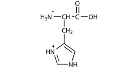 Protonated Histidine by All Amino Acids Two Ionizable Functional Groups