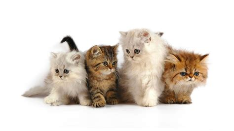 cat wallpaper graphic cat wallpaper and background image 1600x900 id 101496