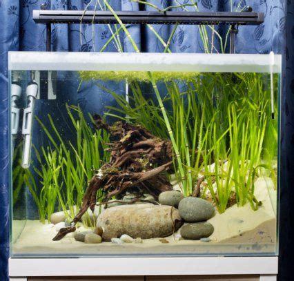 Aquascape Freshwater Aquarium How To Keep Dwarf Puffer Fish Features Practical