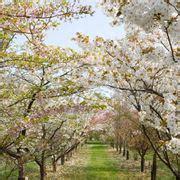 alberi da giardino fioriti alberi esotici alberi da giardino