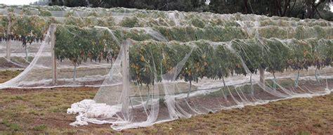 b q fruit netting bird netting