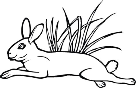 coloring book grass grass coloring sheet for preschool coloring pages