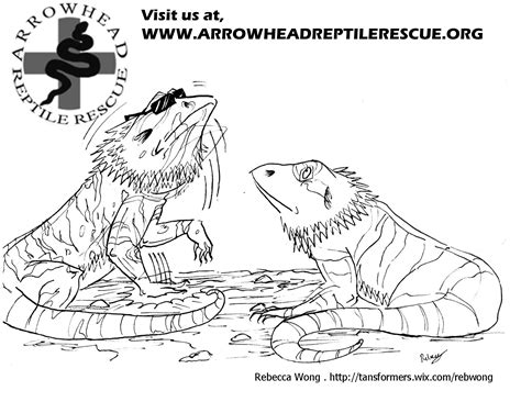 bearded dragon coloring pages realistic coloring pages