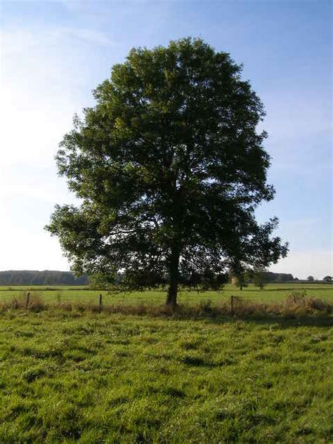 drawing happy little trees tree meditation 2 my little