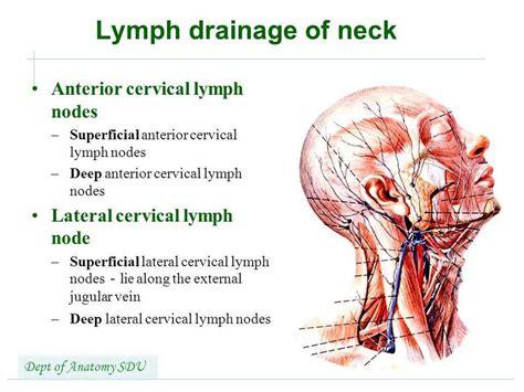 cervical lymph nodes diagram diagram of posterior cervical lymph nodes images how to