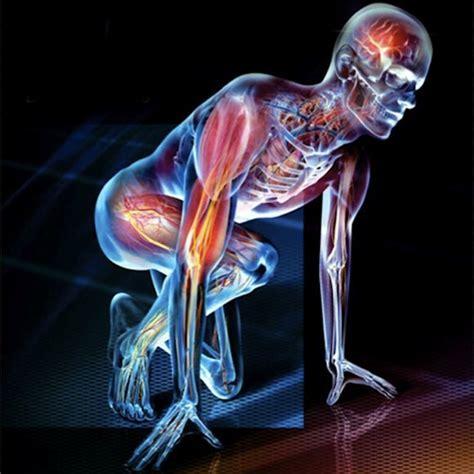 Human Physiology by Human Physiology Nnamdi Azikiwe