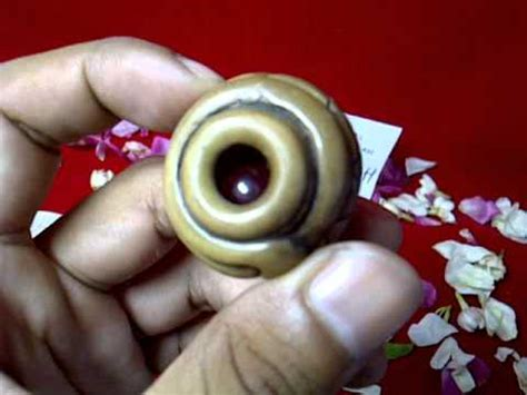 Lumut Batu Raja Hq mustika jala emas asli doovi