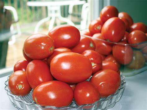 best tomato varieties to grow best tomato varieties to grow this year organic