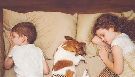 wieviel schlaf braucht ein wie viel schlaf braucht ein