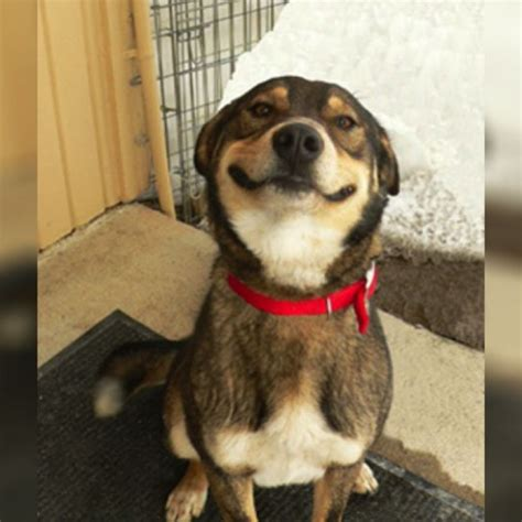 cheer up puppy a bunch of smiling dogs to cheer you up fuzzfeed
