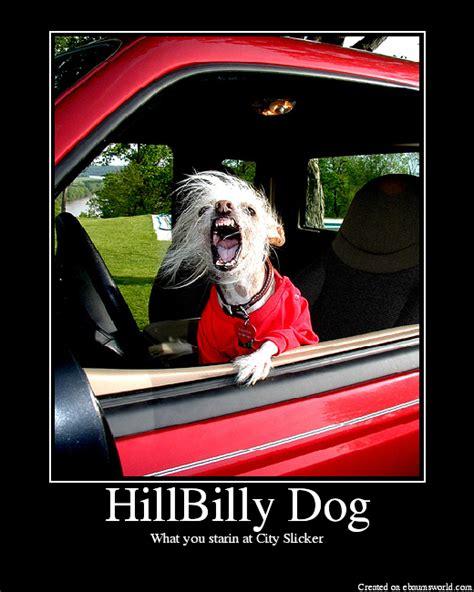 hillbilly dogs hillbilly picture ebaum s world