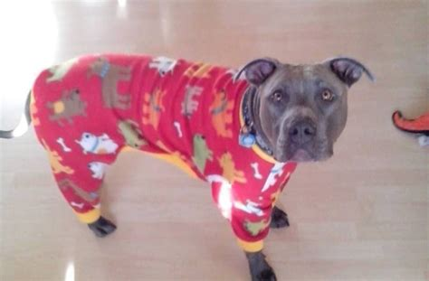 when do pitbull puppies open their pit bulls in pajamas aim to warm up to the breed huffpost