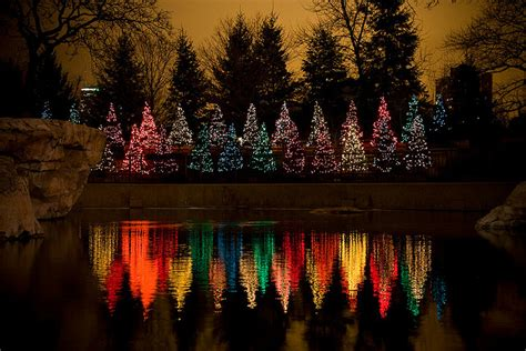 chicago zoo lights a holiday traditionupchicago com