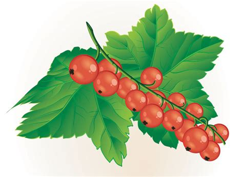 clipart of berries clip cliparts