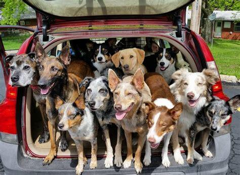 blog post  car   professional dog walker car talk