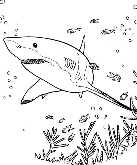 imagenes para colorear tiburon dibujos de tiburones para colorear hd dibujoswiki com