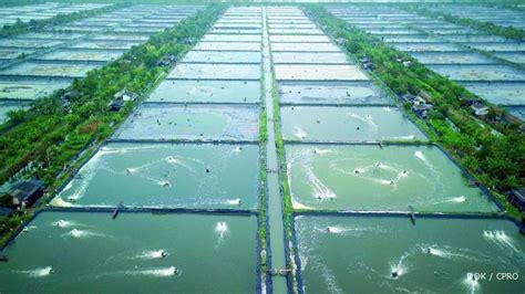 Pakan Udang Laut cp prima andalkan produk pakan ikan dan udang