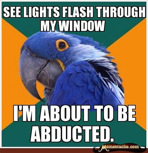 Paranoid Parrot Meme - 23 best images about paranoid parrot on pinterest home