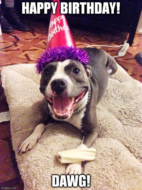 Happy Birthday Meme Dog - image tagged in happy birthday dawg dog hat pitbull imgflip
