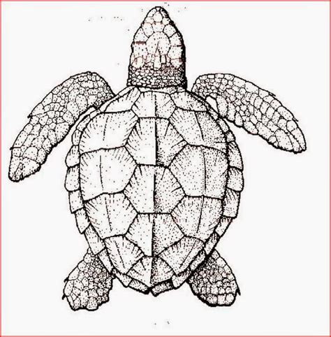 sea turtle coloring page free coloring pages turtles free printable coloring pages