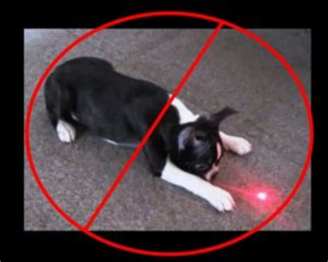 dogs and laser pointers danger of using a laser pointer with your s r