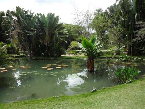 Um Botanical Gardens Um Dos Lagos Peixes Diversos Picture Of Botanical Garden Jardim Botanico De Janeiro